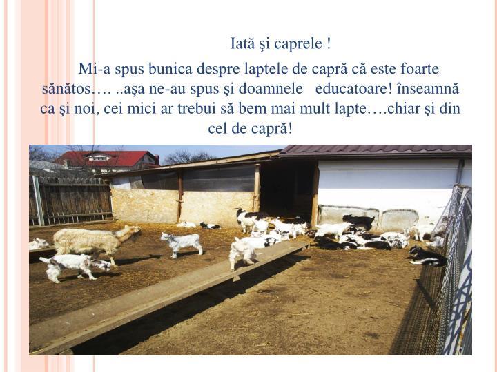 Iată şi caprele !