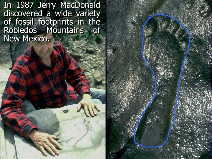 In 1987 Jerry MacDonald discovered a wide variety of fossil footprints in the Robledos Mountains of New Mexico.