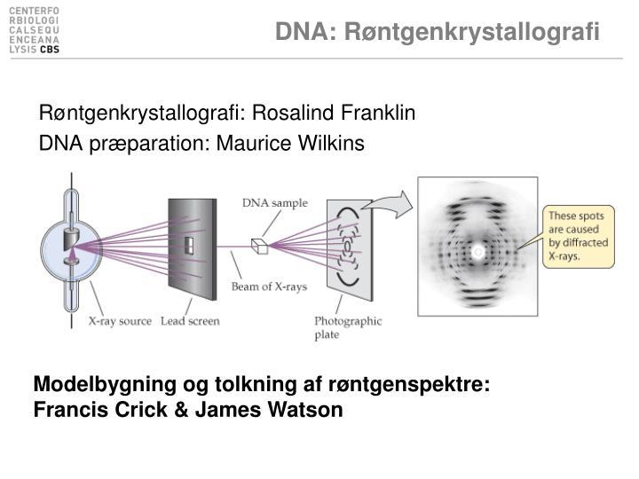 DNA: Røntgenkrystallografi