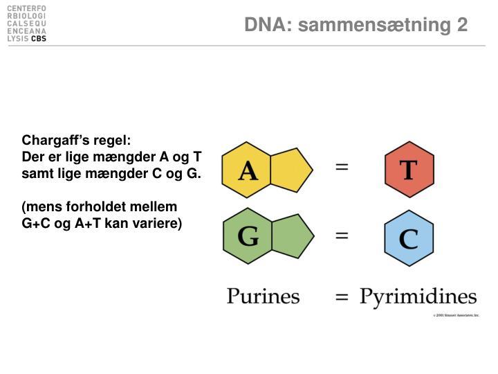 DNA: sammensætning 2