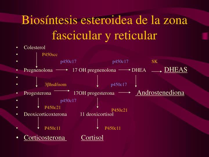 Biosíntesis esteroidea de la zona fascicular y reticular