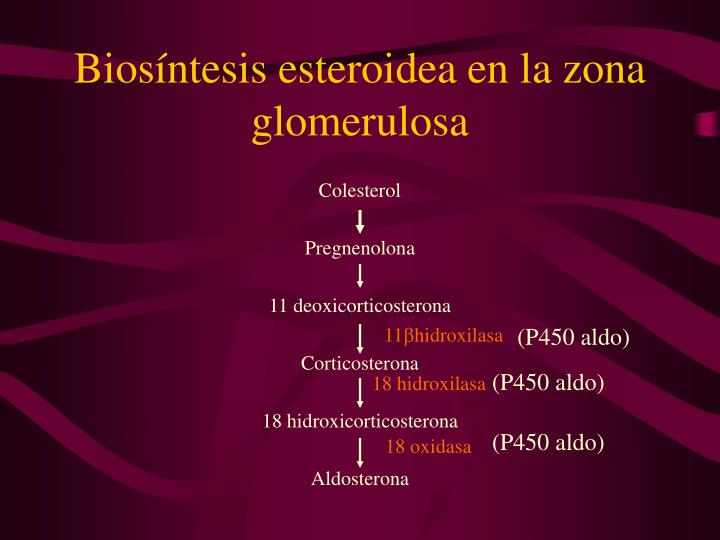 Biosíntesis esteroidea en la zona glomerulosa