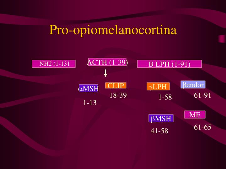 Pro-opiomelanocortina