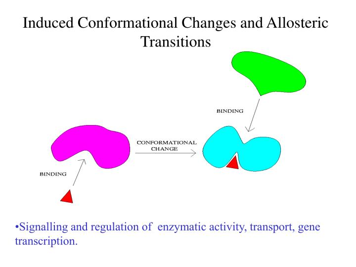 Induced Conformational Changes and Allosteric Transitions