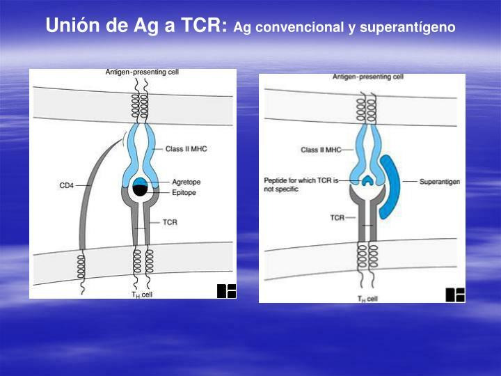 Unión de Ag a TCR: