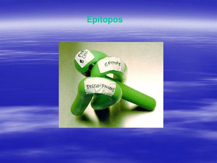 Epítopos