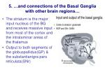 5 and connections of the basal ganglia with other brain regions