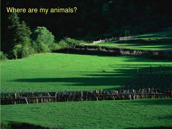 Where are my animals?