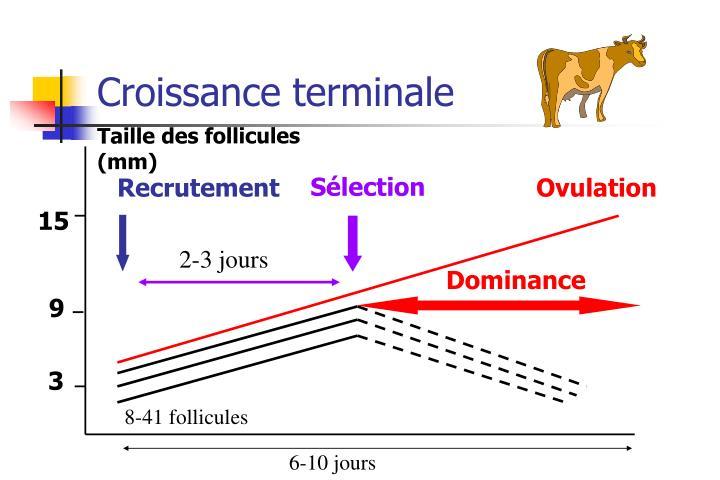 Croissance terminale