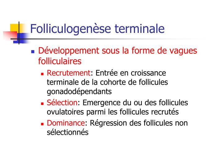 Folliculogenèse terminale