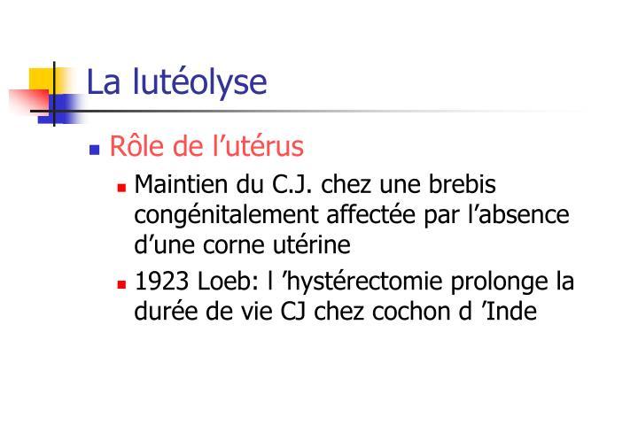 La lutéolyse