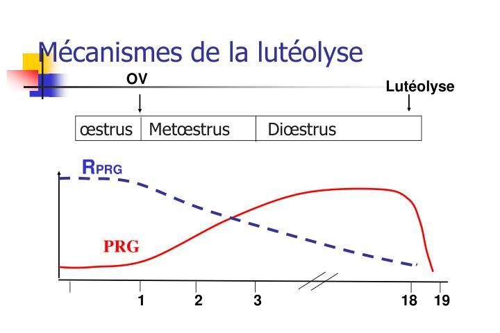 Mécanismes de la lutéolyse
