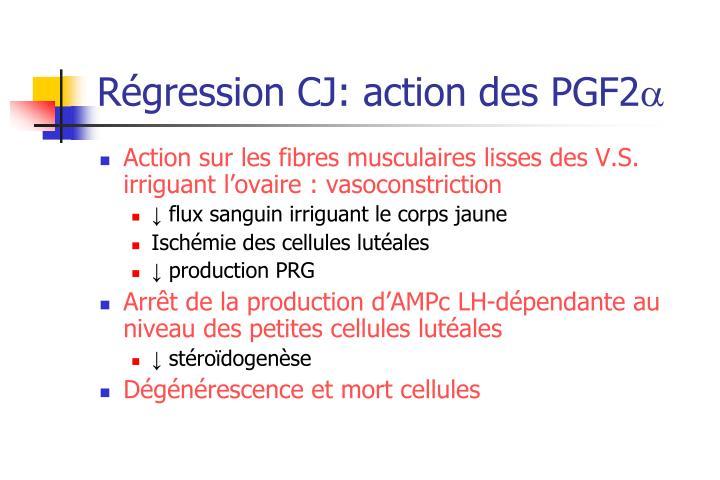 Régression CJ: action des PGF2