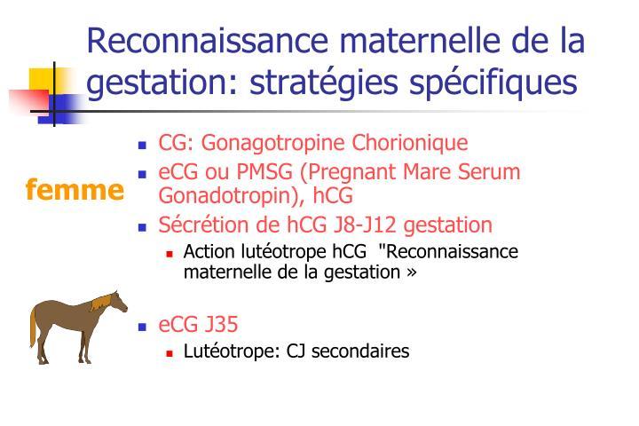 Reconnaissance maternelle de la gestation: stratégies spécifiques