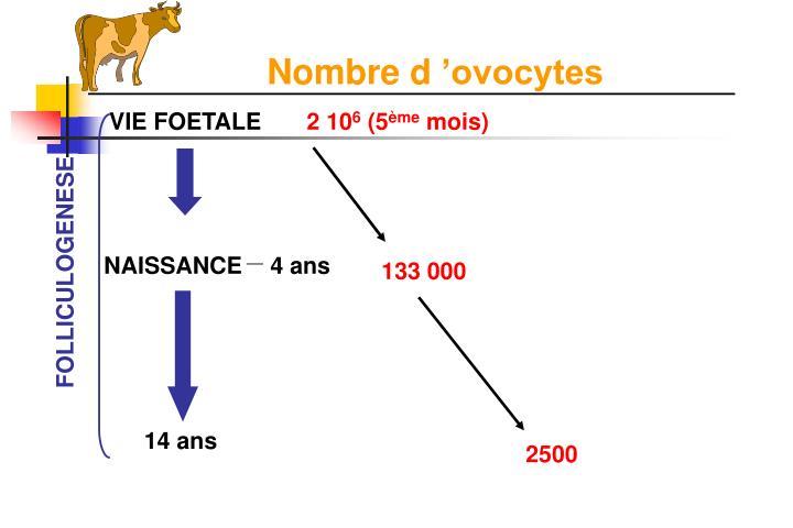 Nombre d'ovocytes