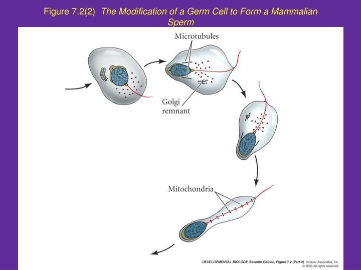 Figure 7.2(2)