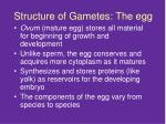 structure of gametes the egg