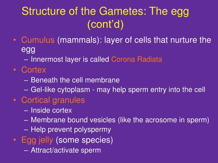 Structure of the Gametes: The egg (cont'd)