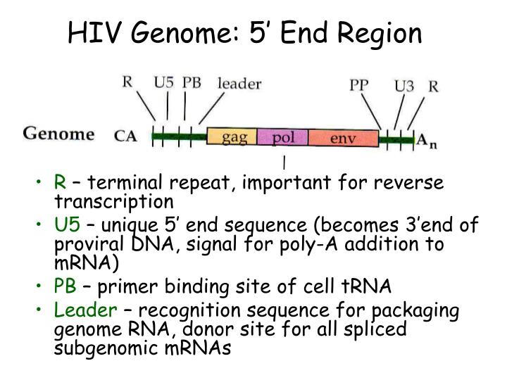 HIV Genome: 5' End Region