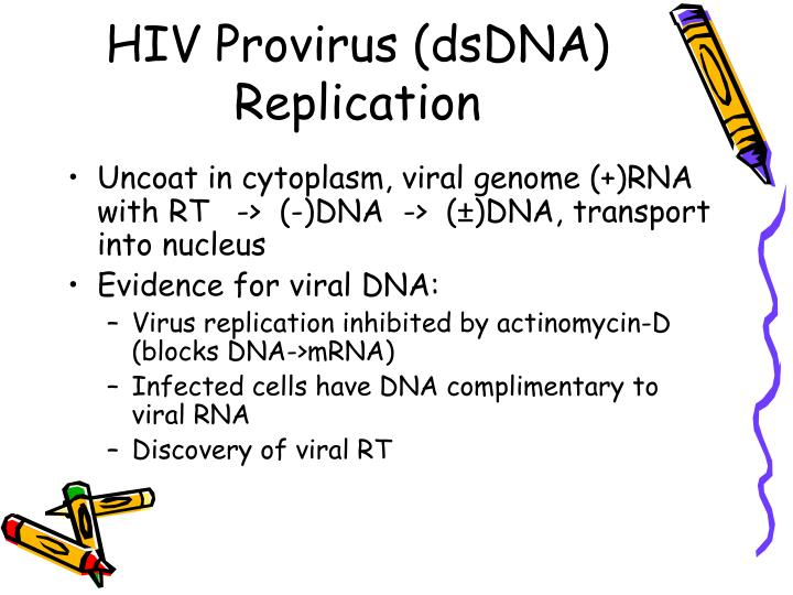 HIV Provirus (dsDNA) Replication