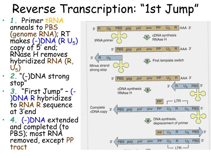 "Reverse Transcription: ""1st Jump"""