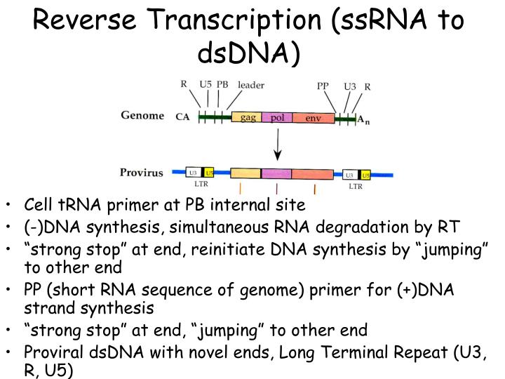 Reverse Transcription (ssRNA to dsDNA)