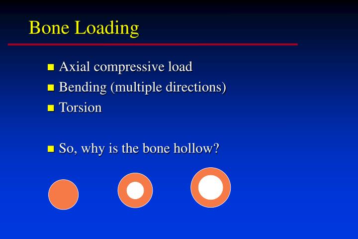 Bone Loading
