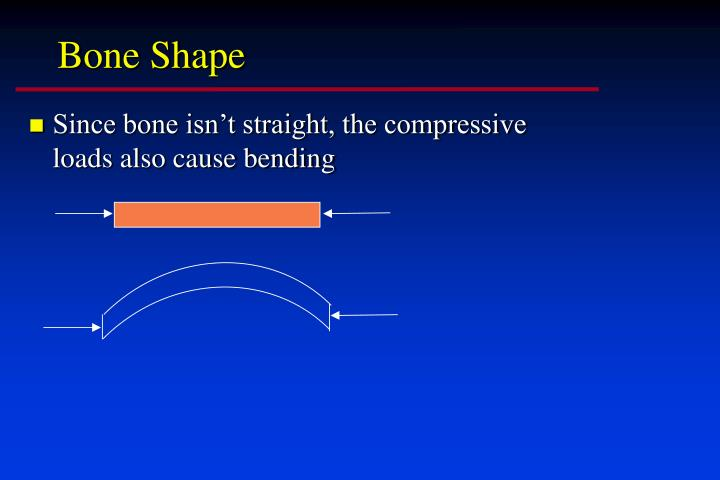 Bone Shape