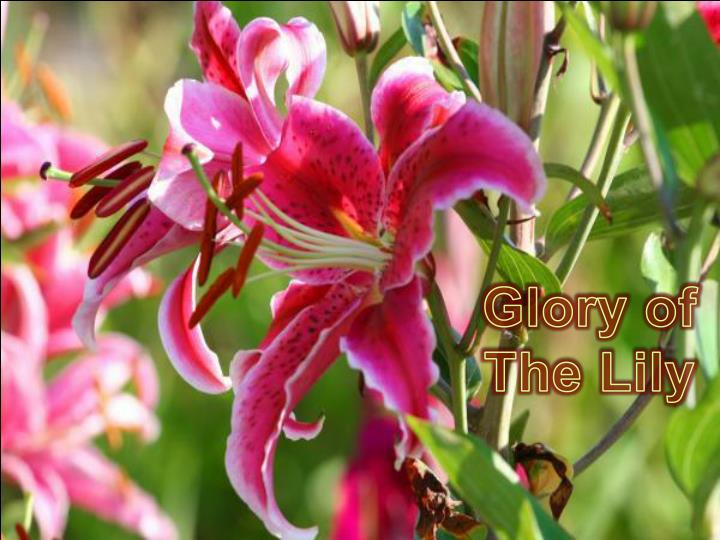 Glory of