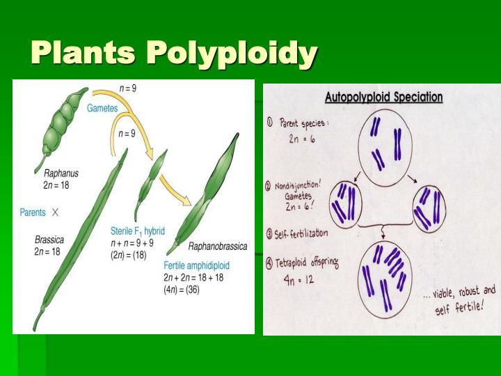 Plants Polyploidy