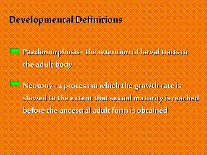 Developmental Definitions