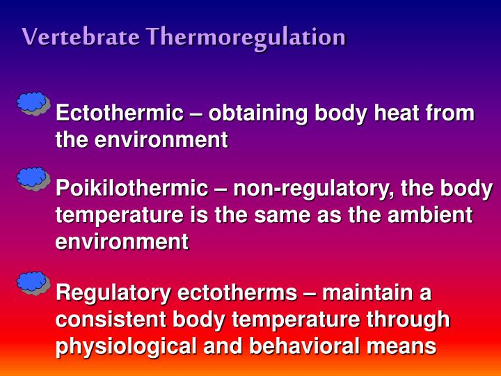 Vertebrate Thermoregulation