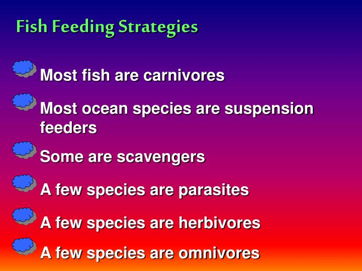 Fish Feeding Strategies