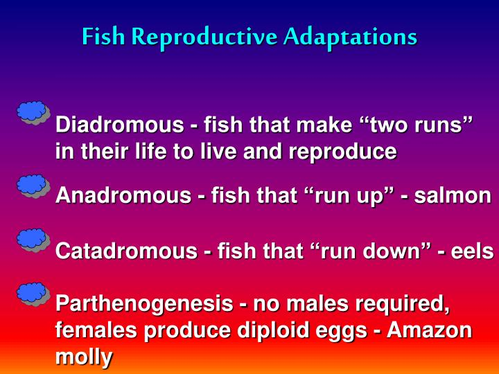 Fish Reproductive Adaptations
