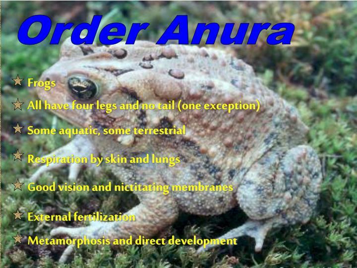 Order Anura