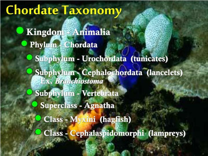 Chordate Taxonomy