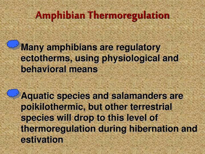 Amphibian Thermoregulation