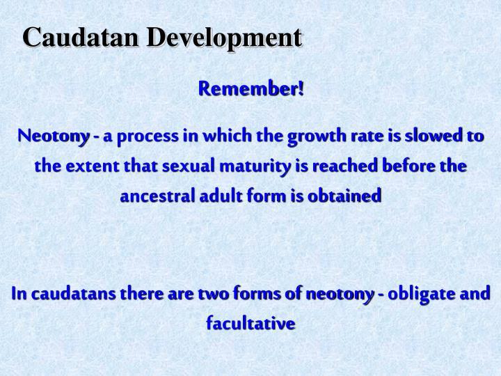 Caudatan Development