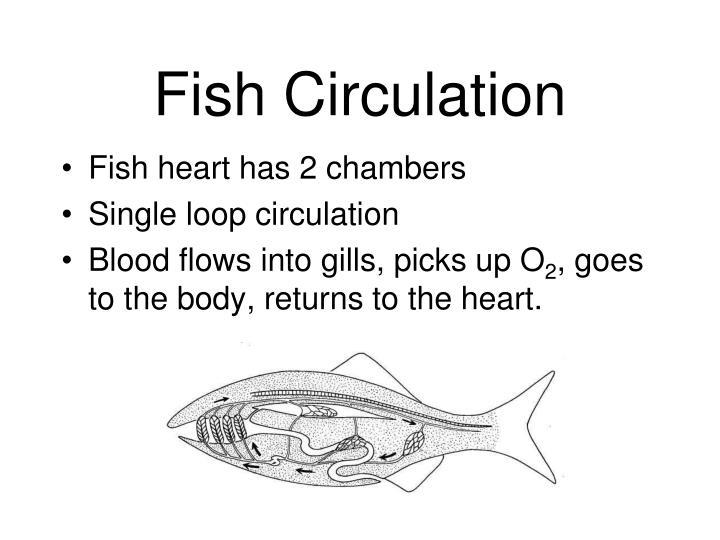 Fish Circulation