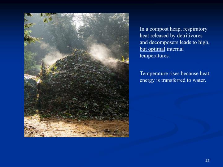 In a compost heap, respiratory heat released by detritivores and decomposers leads to high,