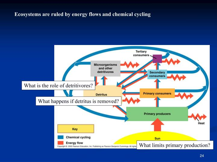 Ecosystems are ruled by energy flows and chemical cycling