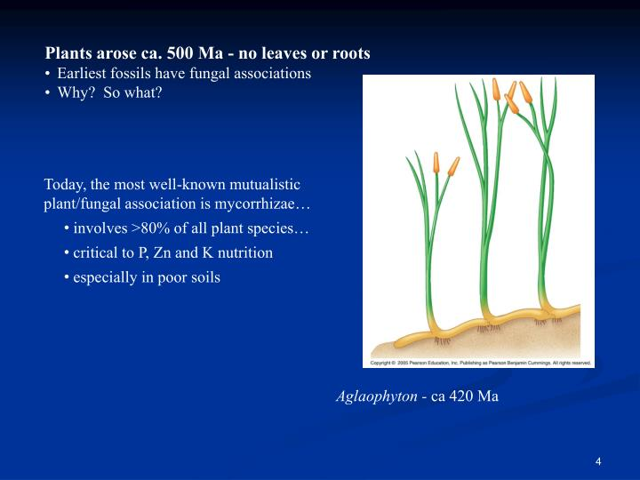 Plants arose ca. 500 Ma - no leaves or roots
