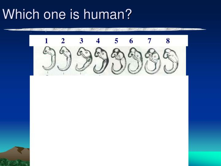 Which one is human?