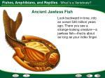 ancient jawless fish