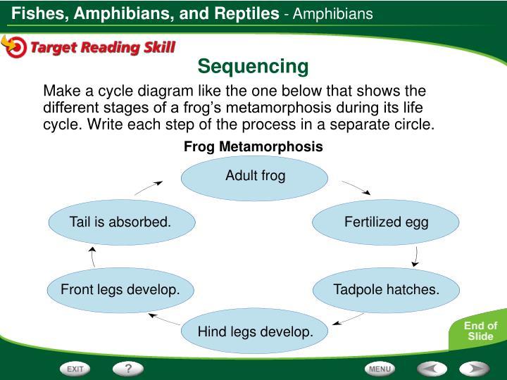 - Amphibians