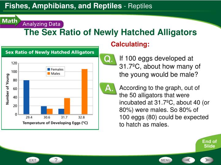 According to the graph, out of the 50 alligators that were incubated at 31.7ºC, about 40 (or 80%) were males. So 80% of 100 eggs (80) could be expected to hatch as males.