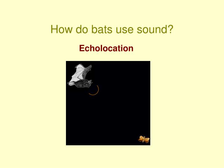 How do bats use sound?