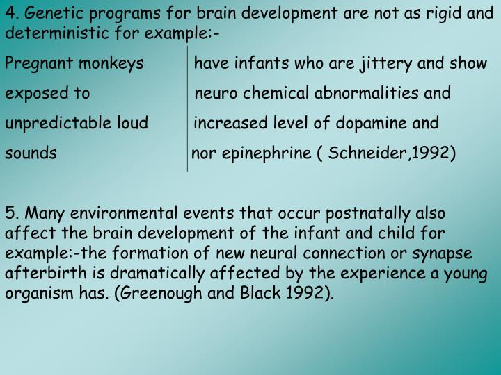 4. Genetic programs for brain development are not as rigid and deterministic for example:-