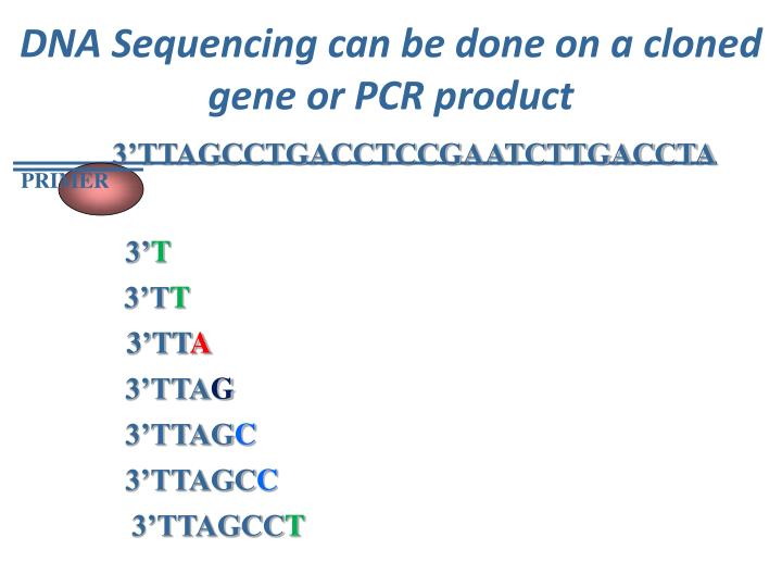 DNA Sequencing can be done on a cloned gene or PCR product