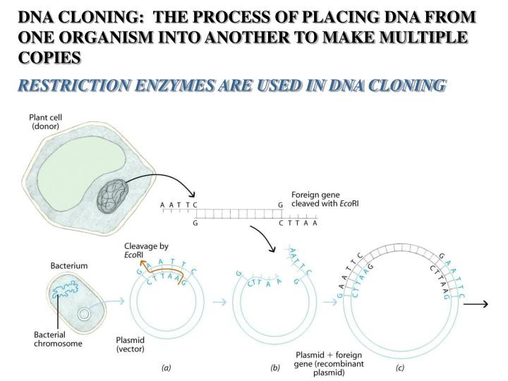 DNA CLONING:  THE PROCESS OF PLACING DNA FROM ONE ORGANISM INTO ANOTHER TO MAKE MULTIPLE COPIES